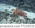 바다 거북 77230532