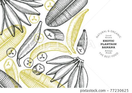 Hand drawn sketch style plantain banner. Organic fresh fruit vector illustration. Retro exotic banana fruit design template 77230625