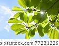 新鮮的綠色生態形象 77231229
