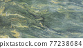 abstract green natural stone marble texture background 77238684