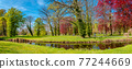 Panoramic view of magical deciduous forest with moss, lichen and epiphyte like vine lianas at early Spring colors during warm sunset in the city park, Potsdam, Germany. 77244669