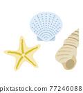 外殼 殼 貝類 77246088