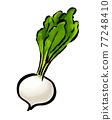 蕪菁 根菜類 塊根類蔬菜 77248410