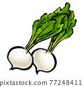 蕪菁 根菜類 塊根類蔬菜 77248411