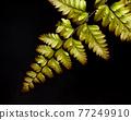 fern leaf 77249910