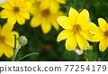 自然 春天 室外 77254179