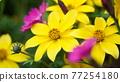 自然 春天 室外 77254180