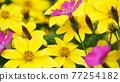 自然 春天 室外 77254182