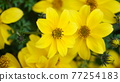 自然 春天 室外 77254183