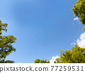 blue sky, verdure, tender green 77259531