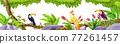 Jungle exotic birds border, tropical nature rainforest illustration, toucan, parrot, liana, rock 77261457