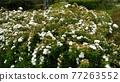 迷迭香 花朵 花 77263552