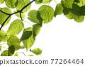 新鮮的綠色生態形象 77264464
