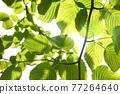 新鮮的綠色生態形象 77264640