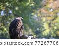 bird, birds, fowls 77267706