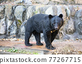 animal, animals, bear 77267715