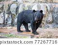 animal, animals, bear 77267716