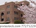 나고야시 공회당과 벚꽃 77271229