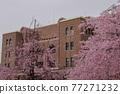 나고야시 공회당과 벚꽃 77271232