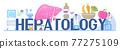 Hepatologist vector for medical website, landing page, header. Concept of hepatitis A, B, C, D, cirrhosis, world hepatitis day. Tiny doctors of hepatolog 77275109