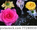Rose flowers floating in water 77280930