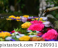 Rose flowers floating in water 77280931