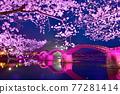 kintai bridge, cherry blossom, cherry tree 77281414