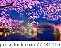 kintai bridge, cherry blossom, cherry tree 77281416