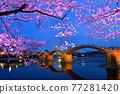 kintai bridge, cherry blossom, cherry tree 77281420