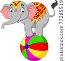 Cartoon funny circus elephant balancing on ball 77285519