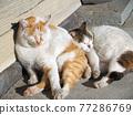 낮잠을하는 고양이 77286769