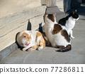 휴식 고양이 77286811