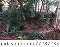 山頂城堡 樹木 樹 77287235