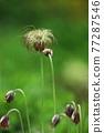 Grass 77287546