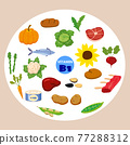 Set of Vitamin C origin natural sources. Healthy diary food, thiamin, fruits, greens, vegetables, fish, nuts, meat, bread. Organic diet products, natural nutrition collection. Vector flat 77288312