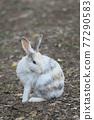 귀여운 토끼 77290583
