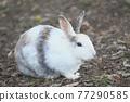 귀여운 토끼 77290585