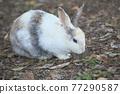 귀여운 토끼 77290587