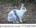 귀여운 토끼 77290589