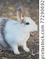 귀여운 토끼 77290692