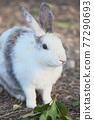 귀여운 토끼 77290693