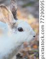 귀여운 토끼 77290695