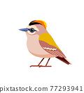 Goldcrest is a very small passerine bird in the kinglet family. Tiny bird Cartoon flat style beautiful character of ornithology, vector illustration isolated on white background 77293941
