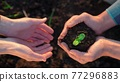 agriculture teamwork. farmers team hands plant a small plant in the ground soil. business teamwork agriculture concept. team man and woman hands close up with plant plant in mud soil eco 77296883