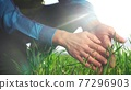 farmer hand. man farmer a working in the field inspects the crop wheat germ eco natural a farming. business agriculture eco concept. farmer hand touches green crop wheat industry germ agriculture 77296903