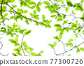 Fresh green eco 77300726