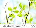 Fresh green eco 77300727