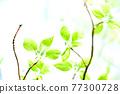 Fresh green eco 77300728