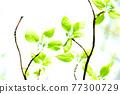 Fresh green eco 77300729