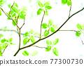 Fresh green eco 77300730